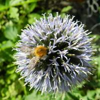Przegorzan i pszczółka