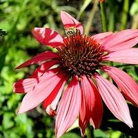 Pszczółki też mile widziane:)