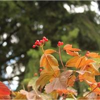 Słoneczna jesień...