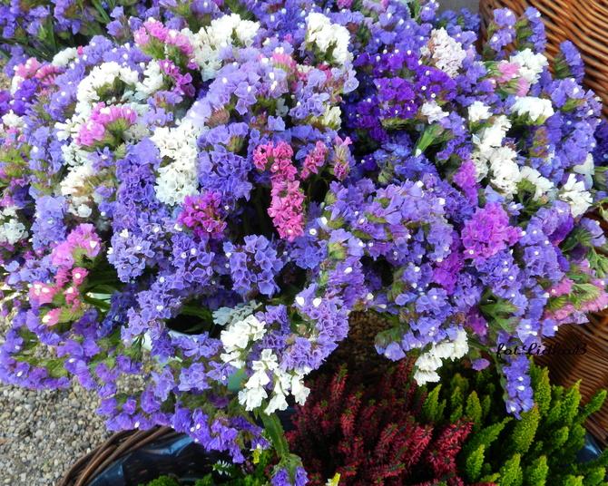Kwiaty zatrwianu