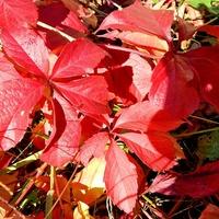 Czerwone jesienią:)