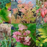 Jesień w ogródku :)