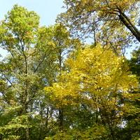 Klony w jesiennych kolorach