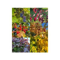 Kolorowa jesień-taka mi pasuje:)