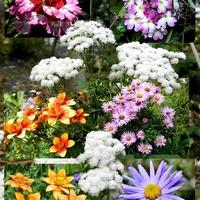 Kolory jesiennego ogródka:)
