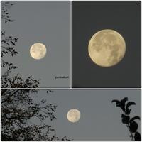 Księżyc dzisiaj o poranku