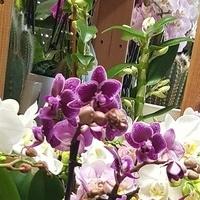 Kwiatki do domu...