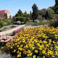 Kwiaty w Ogrodzie Botanicznym