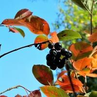 Mamy piękną jesień:)