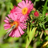 Motyl i pszczółka