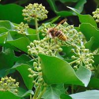 Nie tylko pszczółki i motyle krążą