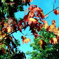 Piękna pogoda i piękna jesień