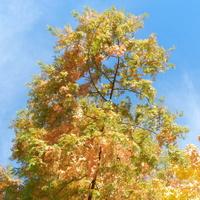 Piękna złota jesień