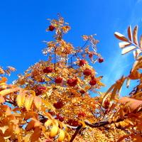 Złotej niedzieli Wam życzę :)